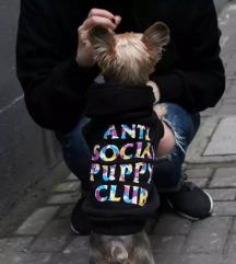 Anti Social Puppy Club kutyapulcsi