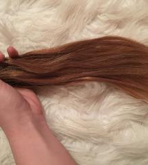 Barna hajacska