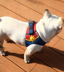 ÚJ Petkit Marvel Kapitány kutyahám + póráz
